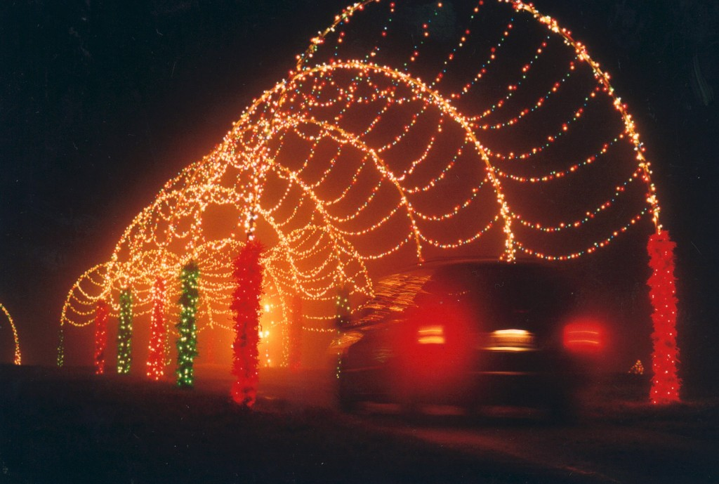 take a drive on the wild side this holiday season at hollywild in wellford south carolina