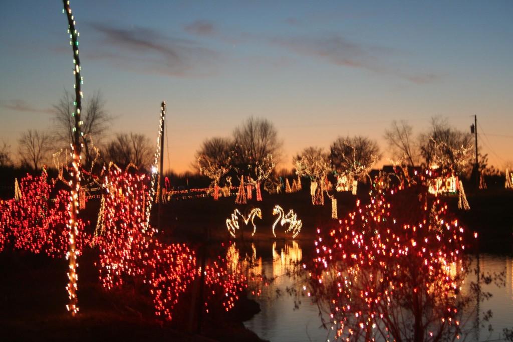 holiday lights safari at hollywild