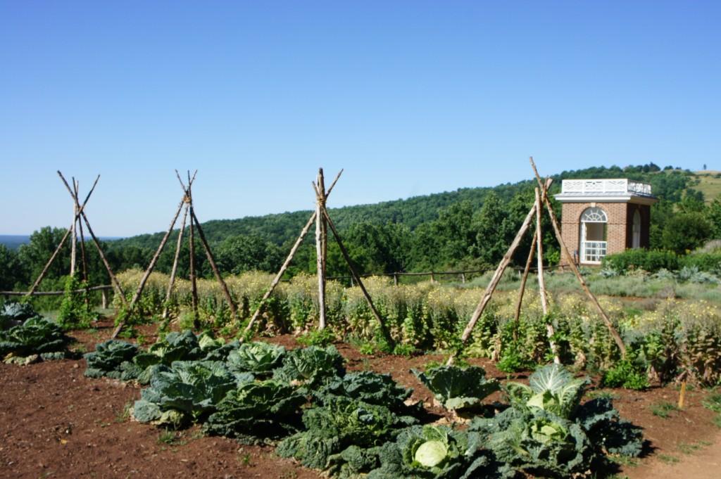 Monticello- garden