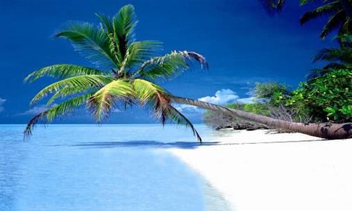 Marvelous Marco Island
