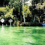 Crystal River: Home to Manatee Swimming Hole
