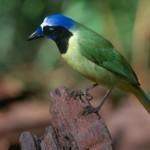 McAllen, Texas:  Birding on the Border