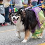 Fairhope's Mystic Mutts Parade Puts on the Dog