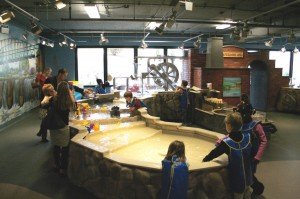 Reedy River Display at The Childrens Museum of the Upstate