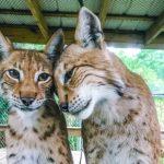 Alabama Gulf Coast Zoo—All About the Animals