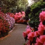 Bellingrath Gardens' Azalea Paradise
