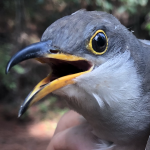 Bird Banders Flock to Fort Morgan
